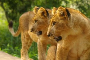 Kruger and Vic Falls Adventure