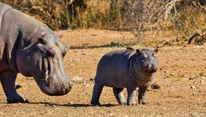 5 Day Kruger Combo Safari