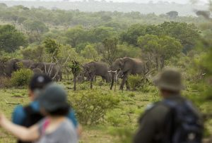 4 Day Kruger Classic Safari