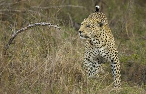 Kruger and Swaziland adventure