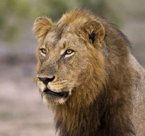 3 day Kruger Classic Safari