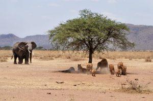 Wildside Tanzania Camping Safari