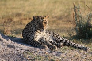 Botswana Wildside Accommodated Safari