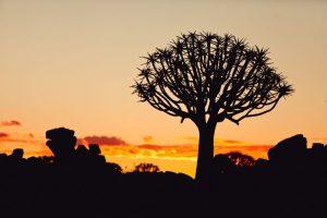 Great African Trek South