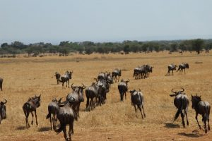 Kenya Accommodated Adventure Safari