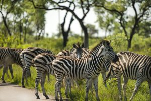 Mozambique in Comfort Accommodation Tour