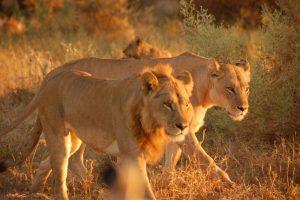 9 Day Best of Botswana