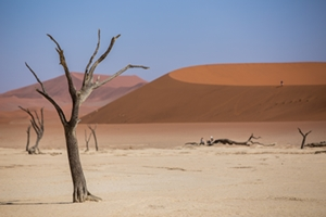 Namibia Highlights Accommodated Safari
