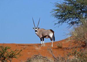 African Odyssey Camping Safari