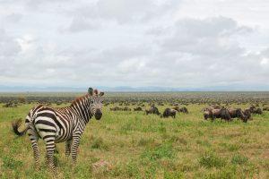 Marangu Route Accommodated Safari