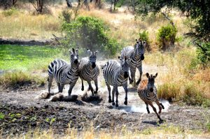 Best of Tanzania Lodge Safari