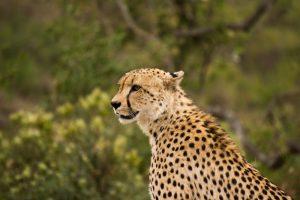 4 day Kruger Treehouse Safari