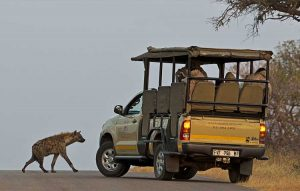 6 Day Kruger Camping Safari