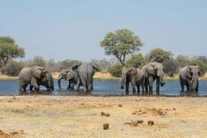 7 day Best of Botswana