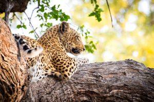 Botswana Wild Parks Accommodated Tour
