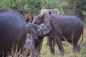 Rainbow Route Accommodated Safari
