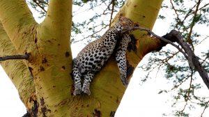 Tanzania & Kenya's Wild Parks