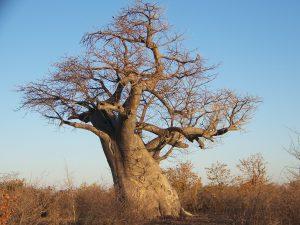 Untouched Botswana Lodge Safari