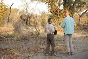 Intimate Botswana & Zimbabwe Encounter