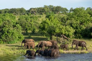 Botswana Explorer Lodge Safari