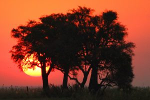 Maun to Vic Falls Adventure