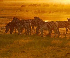 Namibia Adventure Accommodated Safari