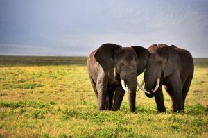 Top Best of Both Africa Tours