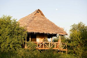 Best of Tanzania & Kenya Lodge Safari