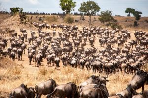 Follow the Migration - Camping Safari.
