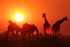 Plan Your African Adventure?