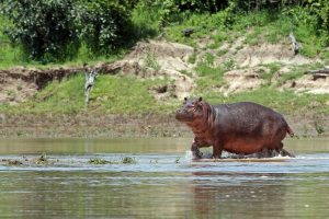 14 days Wild Zambia Safari