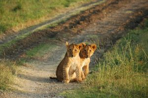 "The Lion King's ""Pride Lands"""
