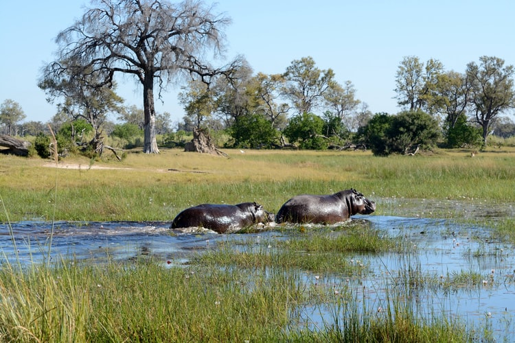 Epic Botswana adventure by Overland Africa