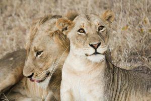 Infamous Kruger National Park - South Africa!