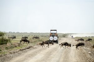 6 Day Tanzania Accommodated Safari
