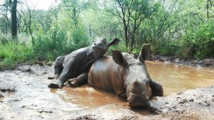 The RHINO Orphanage - South Africa