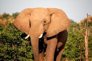 Africa's Botswana Chobe Safari