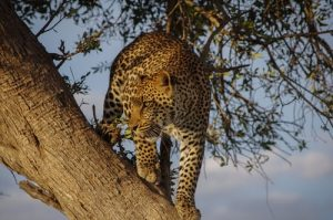 East Africa Safari Adventure