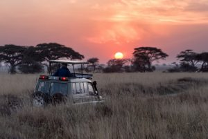 Top Tour Picks for East Africa