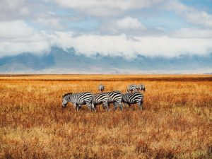 Southern Africa Safari Adventure