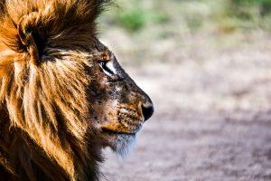 Cape Safari & Falls Safari