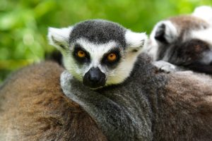 Once in a lifetime Madagascar Adventure